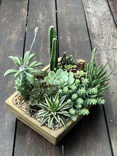 36 Beautiful Cactus Succulents For Home Decoration - homepiez Mini Cactus Garden, Succulent Gardening, Garden Terrarium, Succulent Terrarium, Cactus Flower, Cacti And Succulents, Planting Succulents, Cactus Plants, Flower Pots