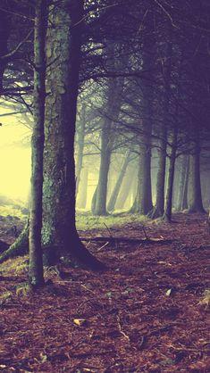 Enchanted-Forest.jpg 640×1,136 pixels