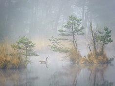 Gansos canadienses en un brumoso estanque de los Países Bajos Fotografía de Andrew George