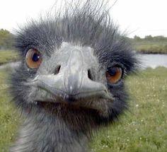 love this ostrich.