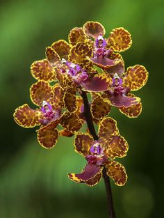 Stunning Orchids! ♥| Orchids in the garden. Fairchild's Orchid Festival.