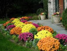 Get your garden plants in time to decorate for Fall