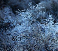 Foggy Frost by tidesend on DeviantArt