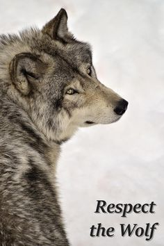 Respect the Wolf