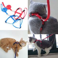 Spoil your feline friend!  Adjustable Nylon ...  now in-stock at http://happycatmeow.com/products/adjustable-nylon-cat-puppy-pet-harness-collar-lead-leash-traction-safety-rope?utm_campaign=social_autopilot&utm_source=pin&utm_medium=pin
