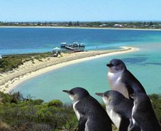 Rockingham wild encounters. Penguin and sea lion cruise in glass bottom boat $33 45 min drive