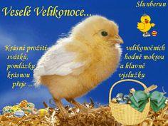 Veselé Velikonoce obrázky, citáty a animace pro Facebook - ObrazkyAnimace.cz Baby Chicks, Cakepops, Facebook, Author, Happy Easter, Cake Pop, Cake Pops