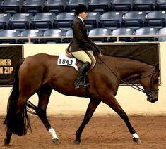 We Ask the Judges: Equitation Do's and Don'ts - GoHorseShow.com