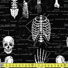 Timeless Treasures Fabric Glow In The Dark Skeletons FQ of Metre Skull Bones