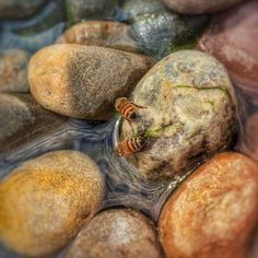 Of Bees and River Rocks