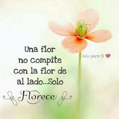 Una flor no compite con la flor de al lado... Solo Florece :