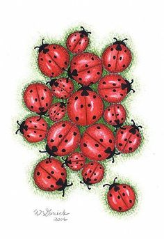 Image detail for -Nature has given the friendly ladybug a very graphic appearance ...