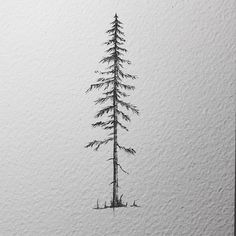 A pine tree for this rainy Monday (didnt stop all day -.-) I got the pleasure to draw this one for a tattoo commission. I would draw them all the time but some change is nice too. Also I know I said I would do a little video showing how I draw them. It is planned but time just runs out at the end of the day. It is on my list. As are the giveaway illustrations havent forgotten them either. . . . #lostswissmiss #illustration #drawing #draw #sketchbook #artwork #artworks #instaart #instaartist…