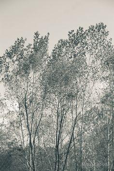 Trees - Garlo Heritage Nature Preserve