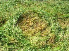 Do circles [2] | Visual Art Research