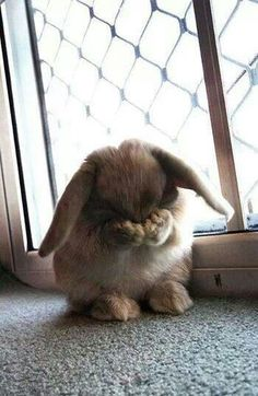 Cute I want this so badly! This is one of my favorite things a bunny does :)