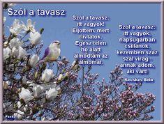 Poems, Education, Children, Plants, Animals, Spring, Google, Animales, Boys