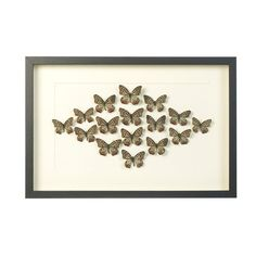 Butterfly Wall Art Picture £117.00