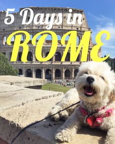 5 Days in Rome. From the Vatican to the Trevi Fountain and everything in between. There is so much to see in Rome. #Rome #Europe