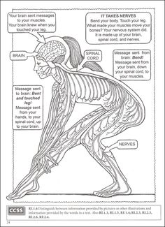 Welcome to Dover Publications : BOOST My First Human Body Coloring ...