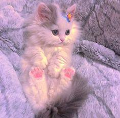 "Save=follow ""không reup dưới  mọi hình thức"" Cute Baby Cats, Cute Little Animals, Kittens Cutest, Cats And Kittens, Funny Cat Wallpaper, Cute Cartoon Wallpapers, Cute Cats Photos, Cute Animal Photos, Cat Icon"