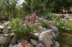 Dans le sud de la France, la paysagiste Violette Egon a mis en forme un jardin sec composé de massifs rocailleux et planté de multiples variétés de fleurs, parfaitement adaptées à un terrain calcaire et un climat méridional. Découverte de ce havre fleuri.