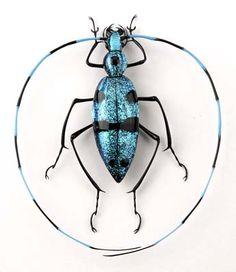 Emanuel Toffolo, glass bug, Lampworked Glass