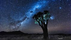 Baobab Tree Under the Night Sky, Namibia Baobab Tree, Then Sings My Soul, Blue Dream, Beautiful Sky, Milky Way, Ciel, Night Skies, Art Pictures, Northern Lights