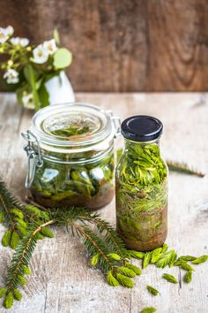 Maiwipfel – now collect and make pickled spruce tips and spruce tips syrup – dinner at eight - Metarnews Sites Baked Drumsticks, Spruce Tips, Magic Herbs, Poisonous Plants, Candy Decorations, Fermented Foods, Natural Cosmetics, Alternative Medicine, Herbal Medicine
