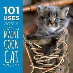 This clever and delightful little book shows that, more than just a pretty face, Maine coons can serve a wide range of duties beyond simply being your adorable companion. Whether you need a boot warme