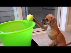 You dog can play fetch even when youre not home dog-and-cats-and-horses-oh-my