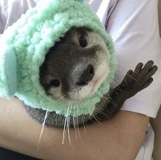 Otters Cute, Cute Ferrets, Baby Otters, Cute Little Animals, Cute Funny Animals, Fluffy Animals, Animals And Pets, Wild Animals, Cute Creatures