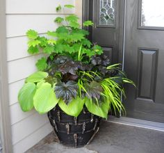 Who says you can't use other plants besides annuals for containers! This is a beautiful shade container with hostas, heuchera, and grasses. Planters For Shade, Shade Plants Container, Garden Planters, Container Gardening, Flower Containers, Fall Planters, Outdoor Plants, Outdoor Gardens, Colorful Plants