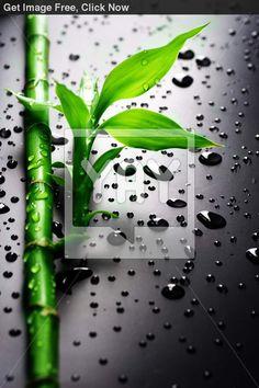 raindrops bamboo black - Szukaj w Google