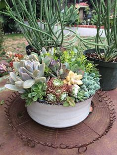 Beautiful eco-friendly and drought resistant potted succulents made by @succulentstyle / Succulent Style — Shop at Seaside Gallery and Goods in Newport Beach, CA