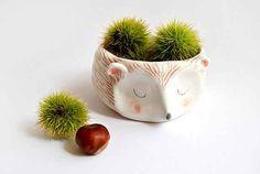 20 adorable hedgehog things