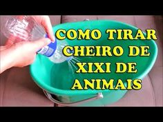 Xixi e Cocô no Lugar certo: Ensinando seu Cachorro - Papo Pet por Pet Anjo - YouTube Dog Care, Pet Shop, Housekeeping, Animals And Pets, Pugs, Youtube, Life, Memes, Pee Smell