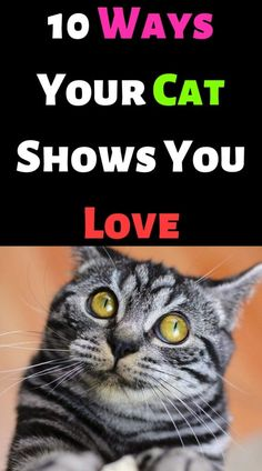 10 Ways Your Cat Shows You Love – #cutecat #instacats #cutecats #petstagram #kittensofinstagram #catloversclub #petsofinstagram #dog #ilovecats #catslife #features #catsoftheday #kittycat #catsoftheworld #instagood #photooftheday #katze #catsofig #caturday #catsofinsta #catsofworld #instagramcats #katzen #gatto #chat #gatosdeinstagram #catslover #photography #nature #blackcat – ANIMALS LOVELY I Love Cats, Cute Cats, Funny Cats, Cat Crying, Ginger Cats, Funny Cat Videos, Cat Gif, Beautiful Cats, Cat Lovers