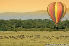 9 most spectacular wildlife migrations - once-in-a-lifetime travel opportunities!!!!