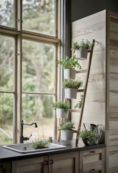 garten am hang SATSUMAS Plant stand with 5 plant pots - bamboo, white - IKEA Window Plants, Hanging Plants, Potted Plants, Plant Pots, Air Plants, Cactus Plants, Nature Plants, Desert Plants, Tomato Plants