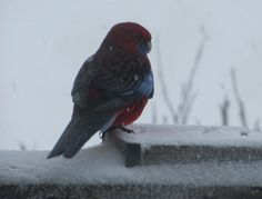 Regular visitor at Oldina Ski Club Lodge Perisher = 14 beds (twin rooms all with en-suites), cooked breakfast & 3 course dinner cooked by our Winter Lodge Manager.  Non-Members welcome. Visit our web site:  www.oldinaperisher.com.au    To book a bed EMAIL bookings@oldinaperisher.com.au or  Ph 02 - 9481 9221 Why not join our club?   Membership information and form  at:  www.oldinaperisher.com.au/members.html