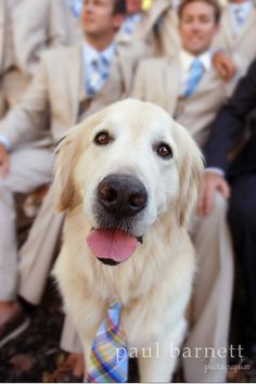 This dog matches his fellow groomsmen by wearing a similar tie. How cute! Photographed by Paul Barnett