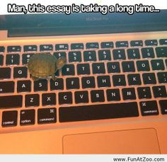 It's going to take forever. Turtle essays
