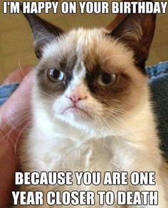 Grumpy cat birthday, grumpy cat happy birthday, funny birthday, humor birthday ...For more jokes quotes and humor pics visit www.bestfunnyjokes4u.com/rofl-funny-pic-of-the-day-8/