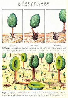 Codex Seraphinianus: History's Most Bizarre and Beautiful Encyclopedia