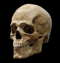 Study based on an skull