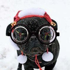Black Pug in snow doggles!
