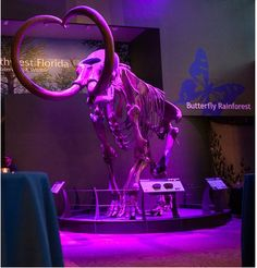 Light the mammoth in a special color to complement your event theme! Choose colors like orange, blue, red, green and more for an additional cost of only $25. http://bit.ly/1U6h8kp