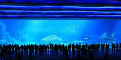 China is taking the aquarium experience to a whole new level.   The Guinness Book of World Records confirmed Monday that Chimelong Ocean Kingdom set five world records, including claiming the title of the largest aquarium in the world.   Chimelon...