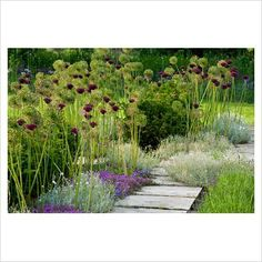 Favourite combination of contemporary landscaping and gorgeous flowers